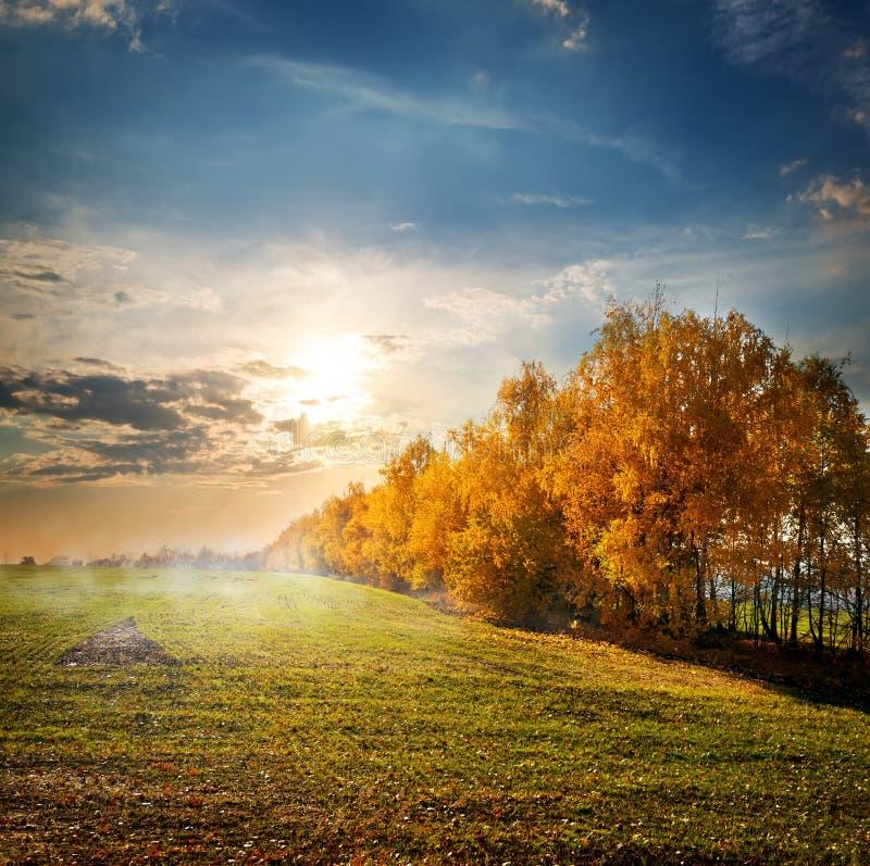 Árvores no campo do outono imagens de stock royalty free