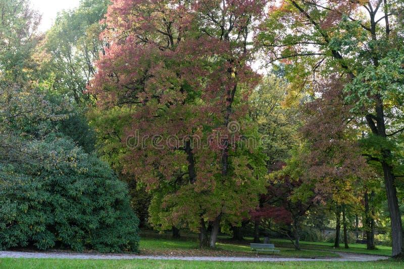 Árvores no começo do parque do outono no dia fotografia de stock