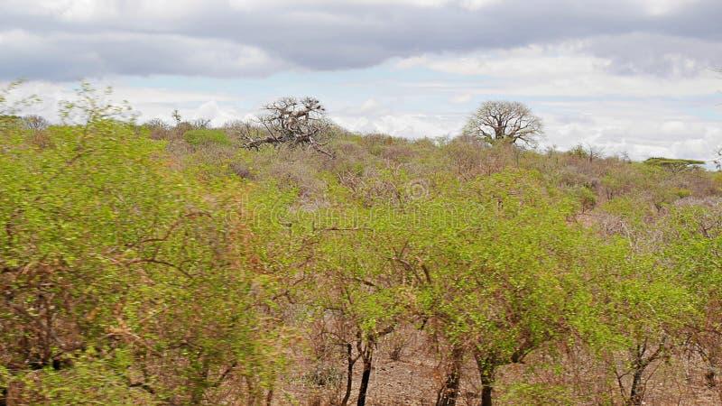 Árvores no deserto fotografia de stock