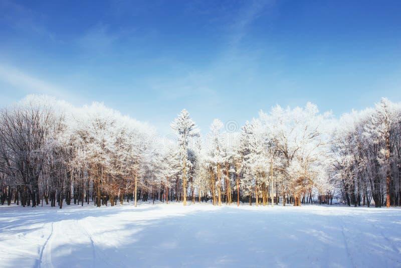 Árvores no dia e na neve de inverno frio foto de stock