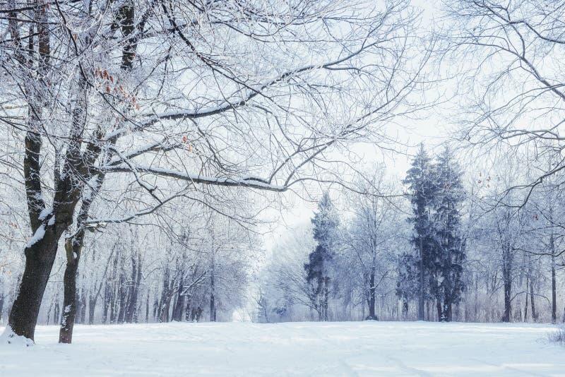 Árvores no dia e na neve de inverno frio fotografia de stock royalty free