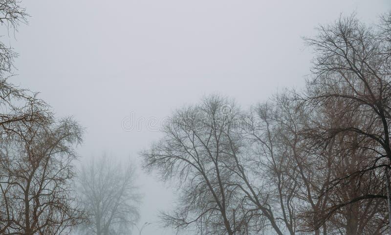 Árvores no dia nevoento Fundo temperamental misterioso enevoado da paisagem imagem de stock royalty free