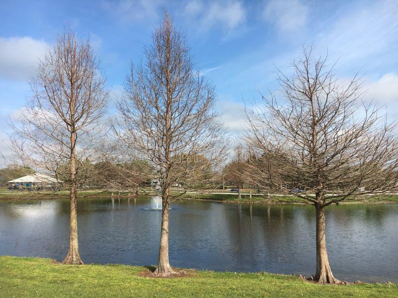 Árvores no inverno fotografia de stock royalty free