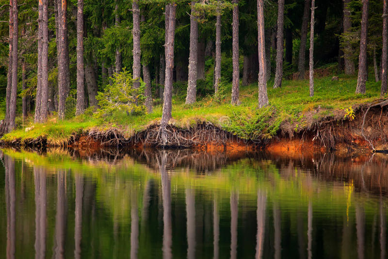 Árvores no lago fotografia de stock