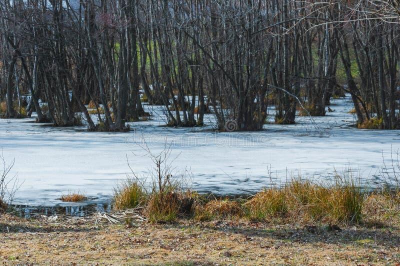 Árvores no lago congelado fotos de stock royalty free