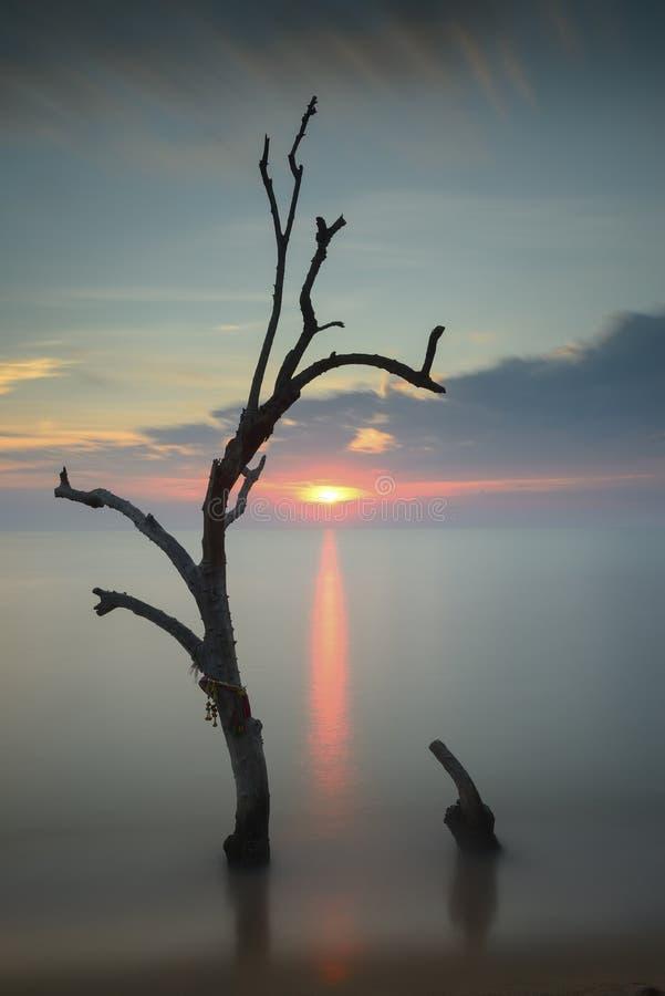 Árvores no mar imagens de stock royalty free