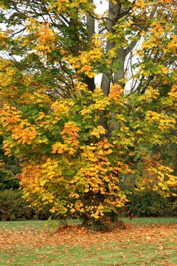 Árvores no outono imagem de stock royalty free