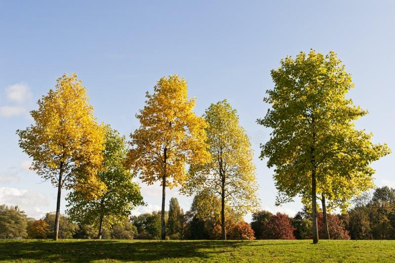 Árvores no outono foto de stock royalty free