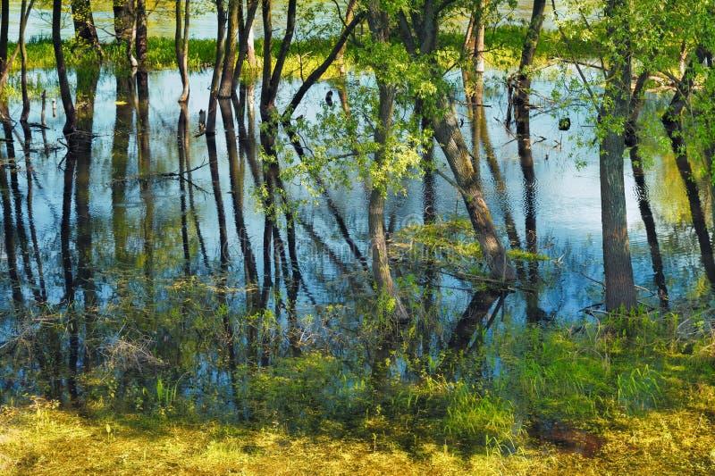 Árvores no pântano foto de stock