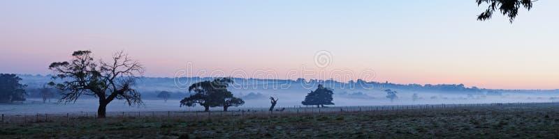 Árvores no panorama da névoa fotos de stock