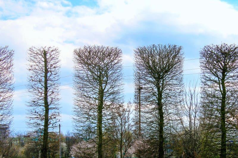 Árvores no parque no céu azul do fundo aparado na forma de um retângulo Figura geom?trica foto de stock royalty free