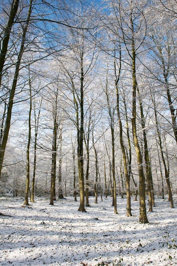 Árvores cobertas com a neve em uma manhã ensolarada do inverno, Países Baixos foto de stock