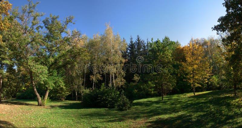 Árvores no parque de Sofiyivka em Uman, Ucrânia fotografia de stock