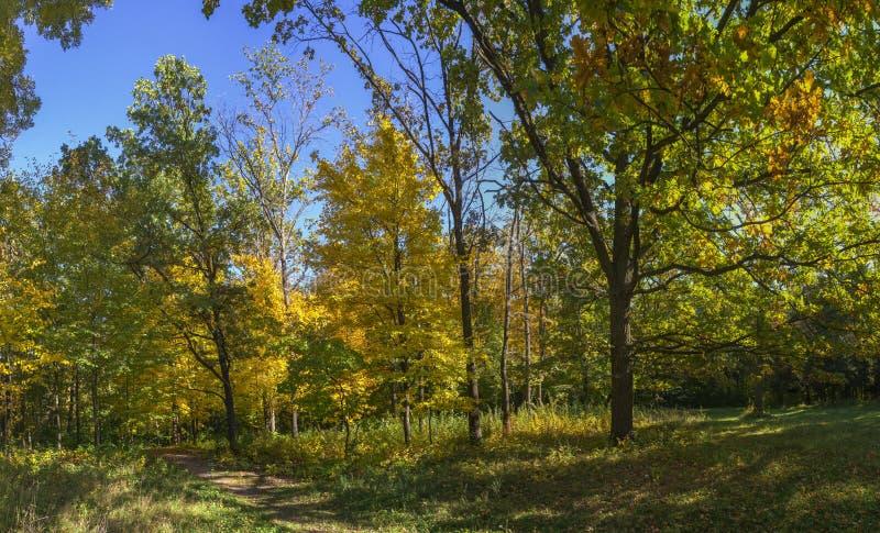 Árvores no parque de Sofiyivka em Uman, Ucrânia imagens de stock