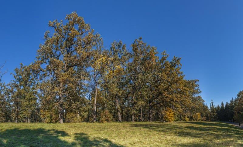 Árvores no parque de Sofiyivka em Uman, Ucrânia fotografia de stock royalty free