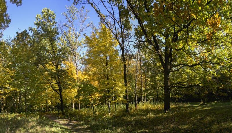 Árvores no parque de Sofiyivka em Uman, Ucrânia fotos de stock royalty free