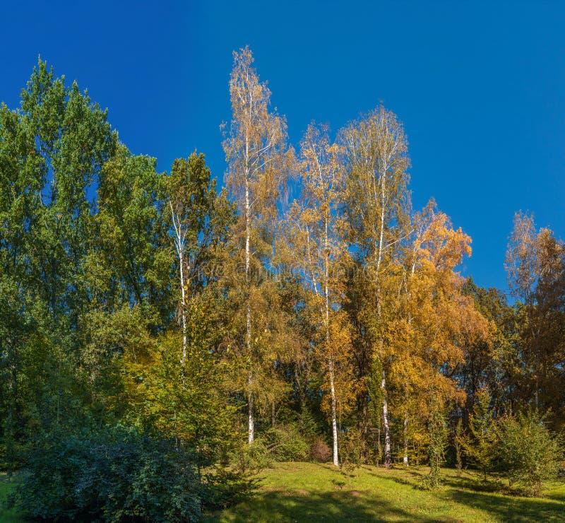 Árvores no parque de Sofiyivka em Uman, Ucrânia foto de stock