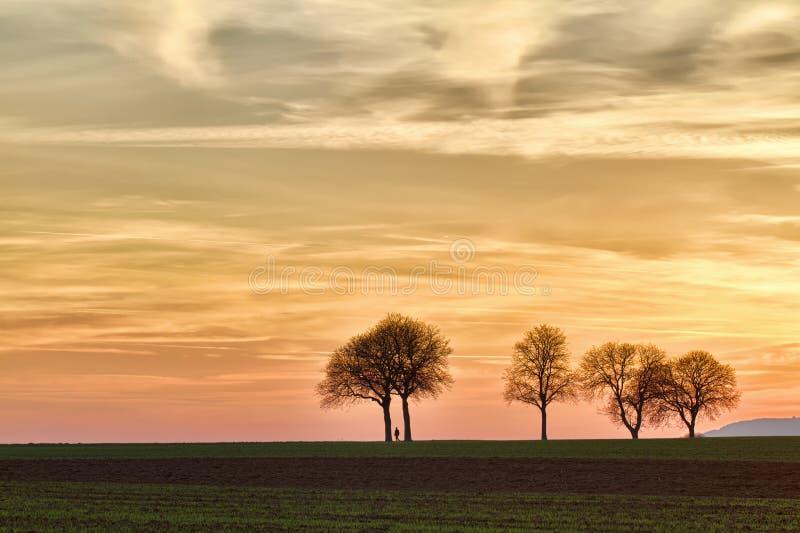 Árvores no por do sol com caminhante, Pfalz, Alemanha imagem de stock royalty free
