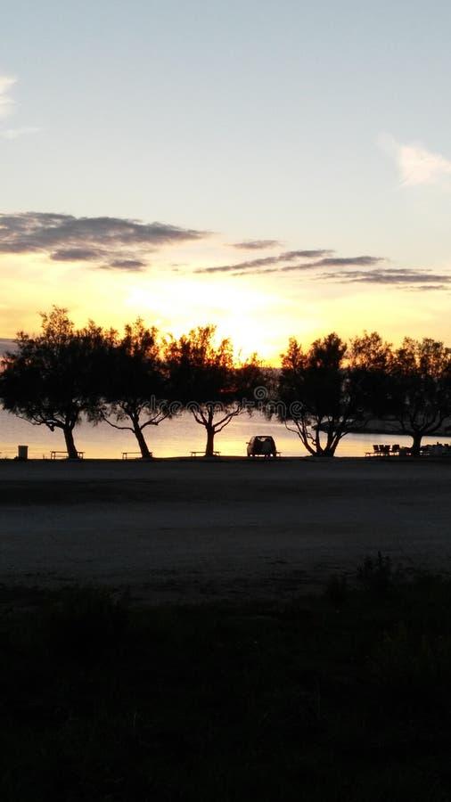 Árvores no sol imagens de stock
