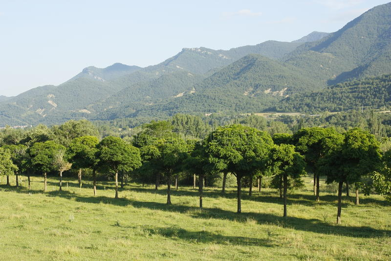 Árvores no vale do Ara do rio, pyrenees imagens de stock