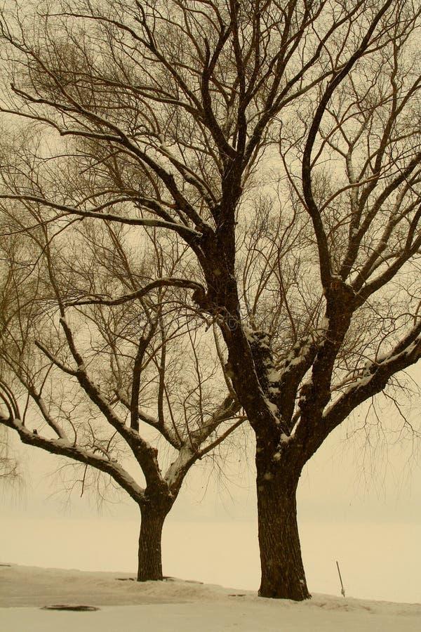 Árvores no witer imagens de stock