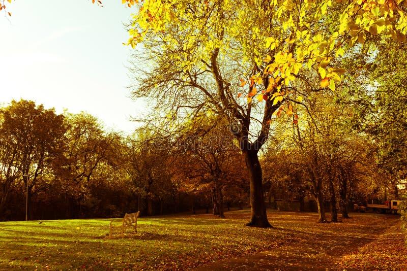 Árvores outonais bonitas e brilhantes no parque escocês com luz solar da tarde fotos de stock royalty free