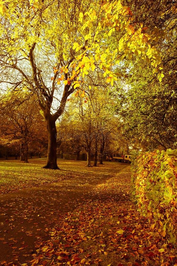 Árvores outonais bonitas e brilhantes no parque escocês com luz solar da tarde imagens de stock