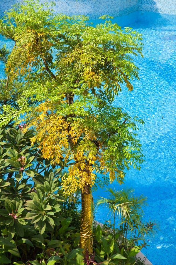 Árvores pela piscina fotos de stock royalty free