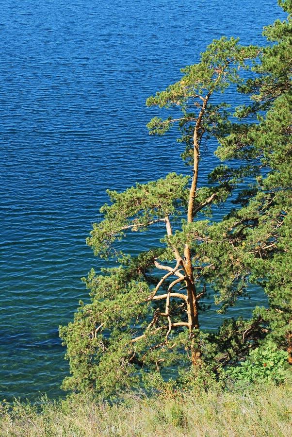 Árvores pelo oceano fotografia de stock royalty free
