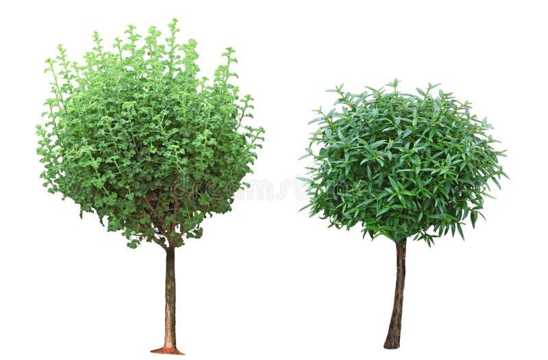 Árvores pequenas foto de stock