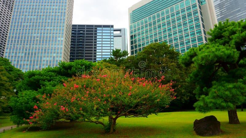 Árvores pequenas cercadas por grandes prédios de escritórios Grande e jardim atrativo da paisagem no Tóquio Jardins de Hamarikyu, fotos de stock