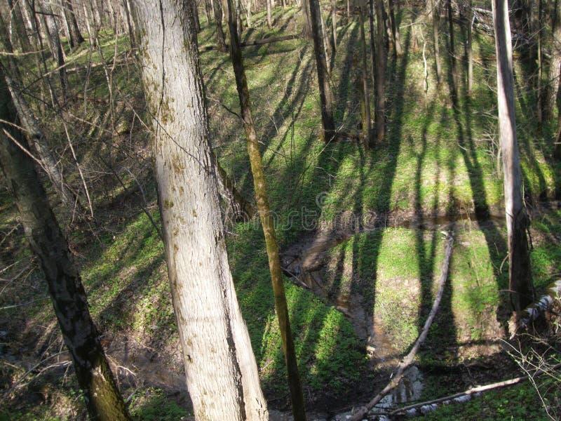 Árvores perto da ravina foto de stock royalty free