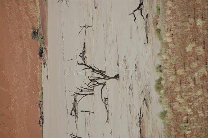 Árvores Petrified imagem de stock royalty free