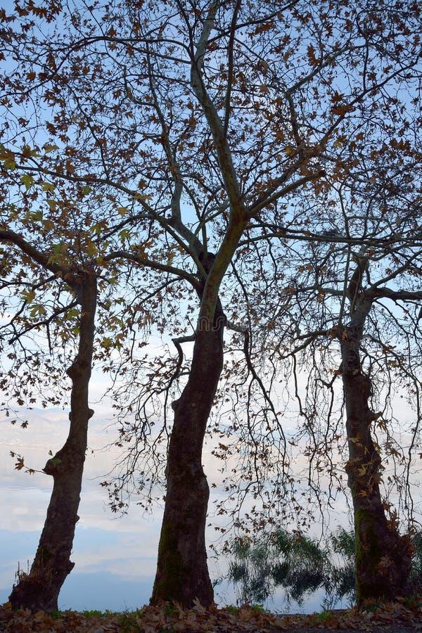 Árvores planas imagem de stock