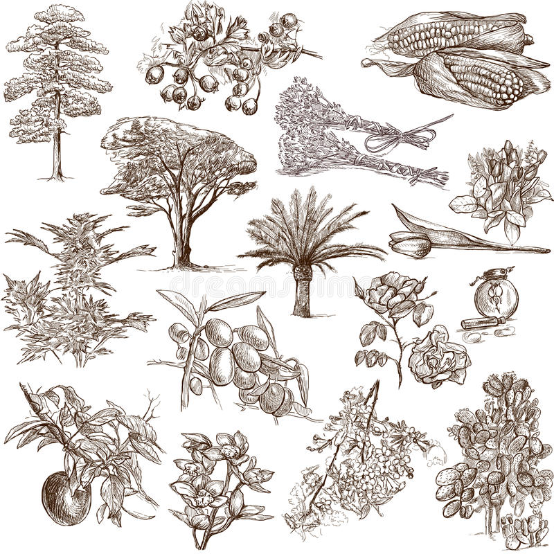 Árvores, plantas e flores