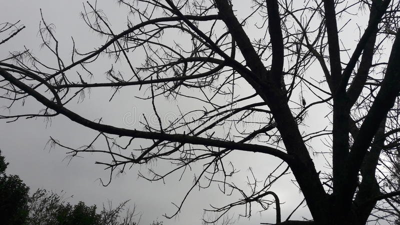 Árvores preto e branco fotografia de stock