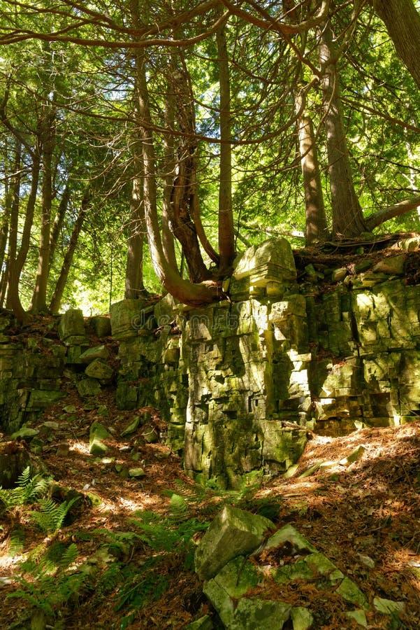 Árvores que crescem fora de uma parede da rocha em Door County, WI fotos de stock royalty free