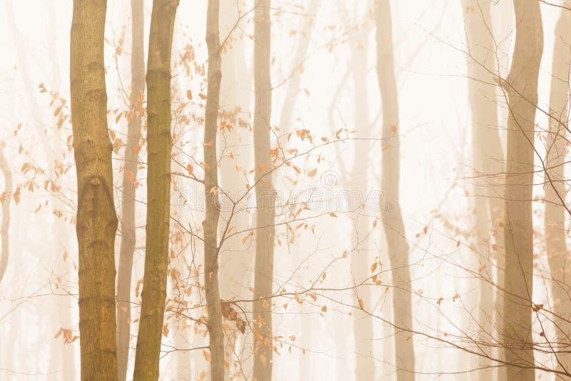 Árvores que desaparecem rapidamente fotografia de stock royalty free