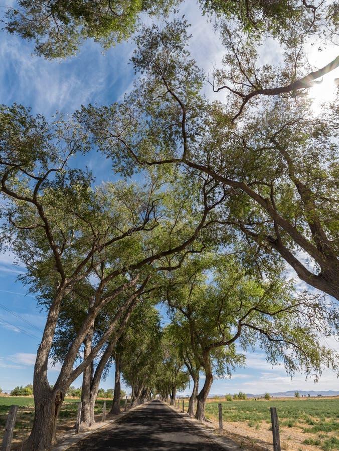 Árvores que formam um dossel da estrada fotografia de stock royalty free