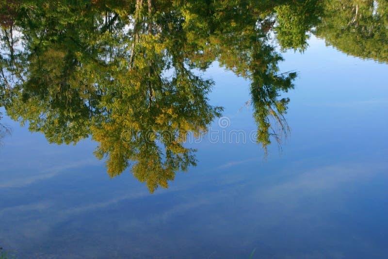 Árvores que refletem em um lago azul fotos de stock