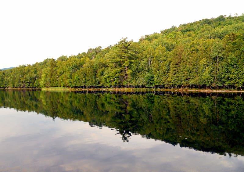 Árvores que refletem na água foto de stock royalty free