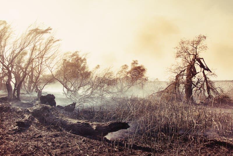 Árvores queimadas após um incêndio florestal foto de stock