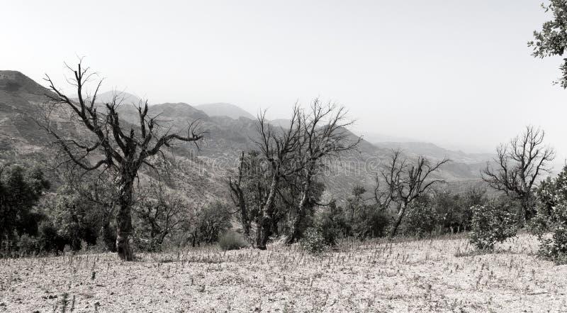 Árvores queimadas em um fundo da paisagem da montanha fotos de stock