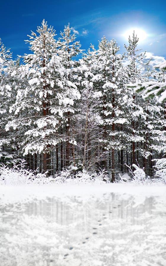 Árvores refletidas fotografia de stock