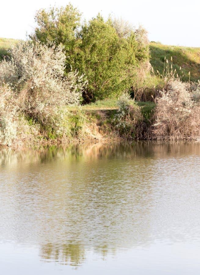 Árvores refletidas em um lago foto de stock