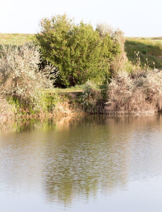 Árvores refletidas em um lago imagens de stock