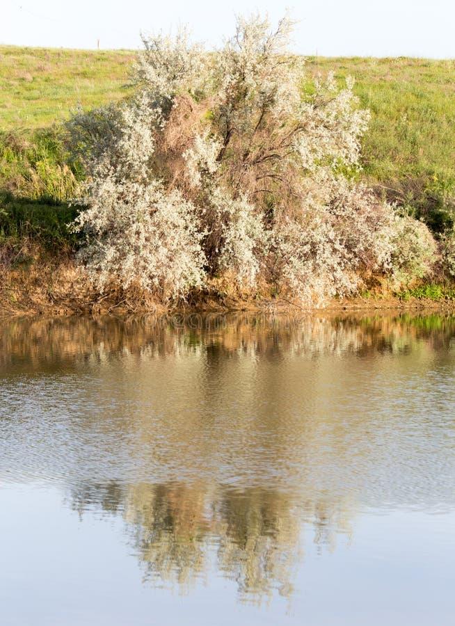 Árvores refletidas em um lago imagens de stock royalty free