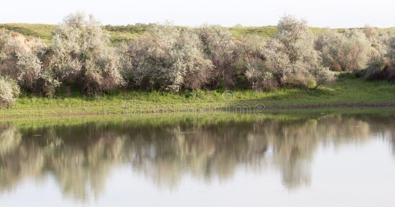 Árvores refletidas em um lago foto de stock royalty free