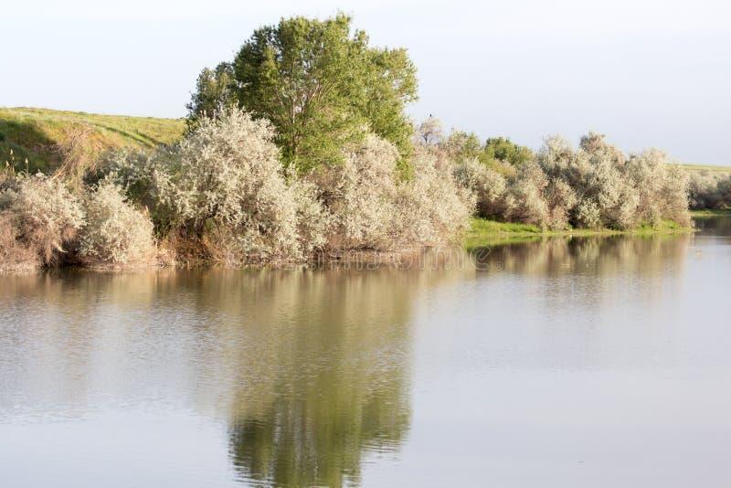 Árvores refletidas em um lago imagem de stock royalty free