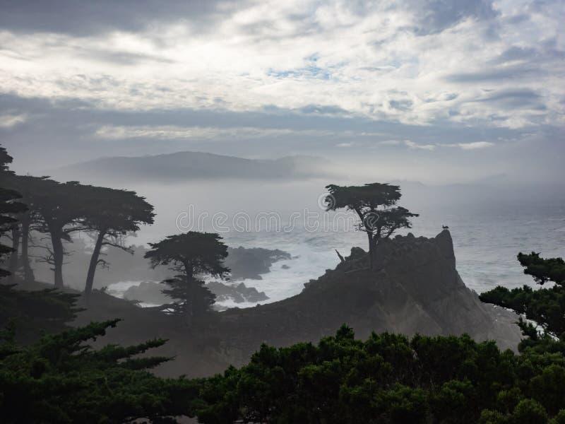 Árvores resistidas de Monterey Cypress na costa fotografia de stock royalty free